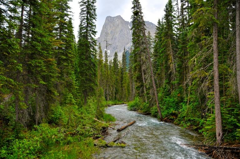 Emerald Lake Creek
